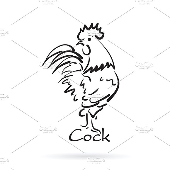 Hand drawn cock on white background.