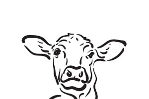Vector of hand drawn cow.