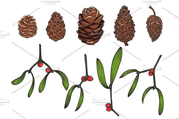 Hand Drawn Pine Cone