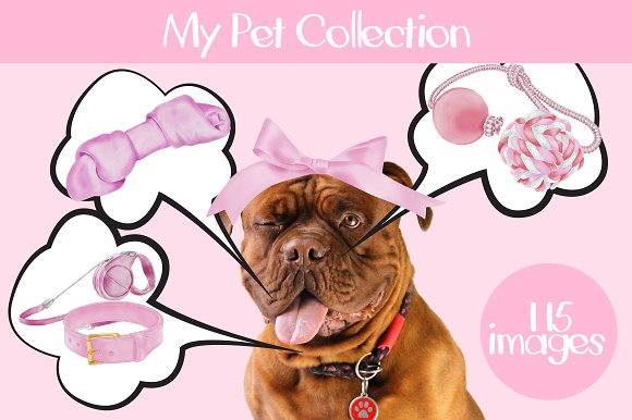 My Pet Collection