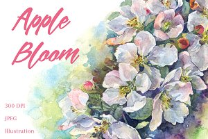 SALE! Watercolor apple bloom flowers