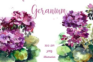 SALE! Watercolor geranium
