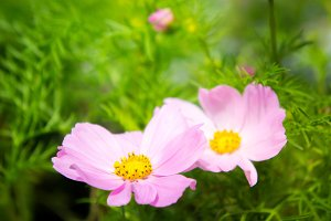 morning time with pink flowers