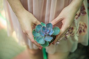 the girl holds a succulent.