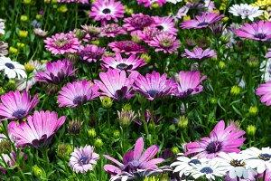Meadow of bright blooming flowers