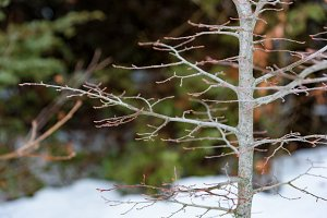 Tree branch closeup