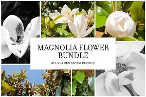 Magnolia Flowers Stock Bundle