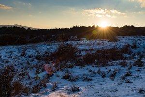 Sunset in winter forest sunlight
