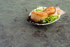 Freshly cooked scallops on a shell