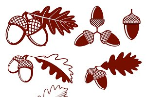 Oak acorns and leaves vector set