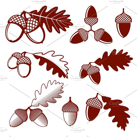 Oak Acorns And Leaves Vector Set