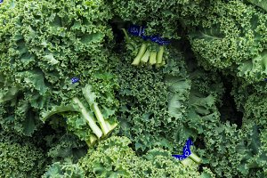 Curly kale on display at the market