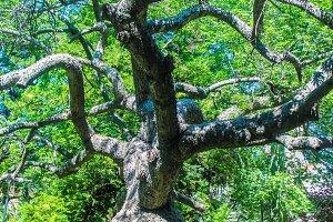 Garden Tree Detail