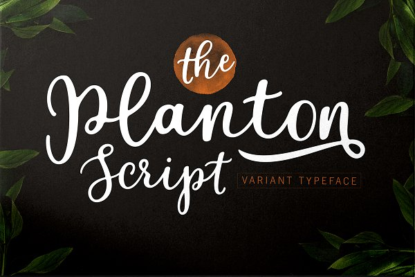 Calligrapher S Font Bundle 98 Off Stunning Script Fonts Creative Market