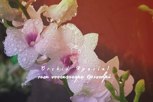 Flora Photo Pack - Orchid Special