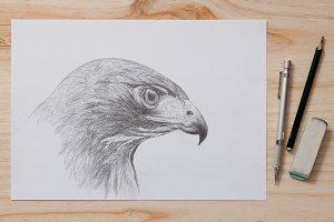Drawing a pencil hawk