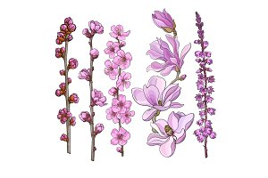 Hand drawn pink flowers - magnolia, apple and cherry blossom, heather
