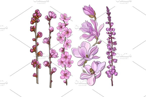Hand Drawn Pink Flowers Magnolia Apple And Cherry Blossom Heather
