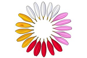 Set of hand drawn white, pink, yellow, red gerbera petals