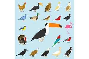 big set of tropical, domestic and other birds, cardinal, flamingo, owls, eagles, bald, sea, parrot, goose. raven. sparrow. chicken. turkey. cockatoo. pigeon. toco toucan. hornbill. griffon. duck.