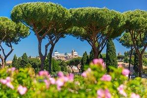 Rome Rose Garden, Italy