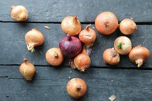 Large onion harvest