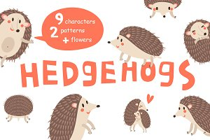HEDGEHOGS. Cute vector set