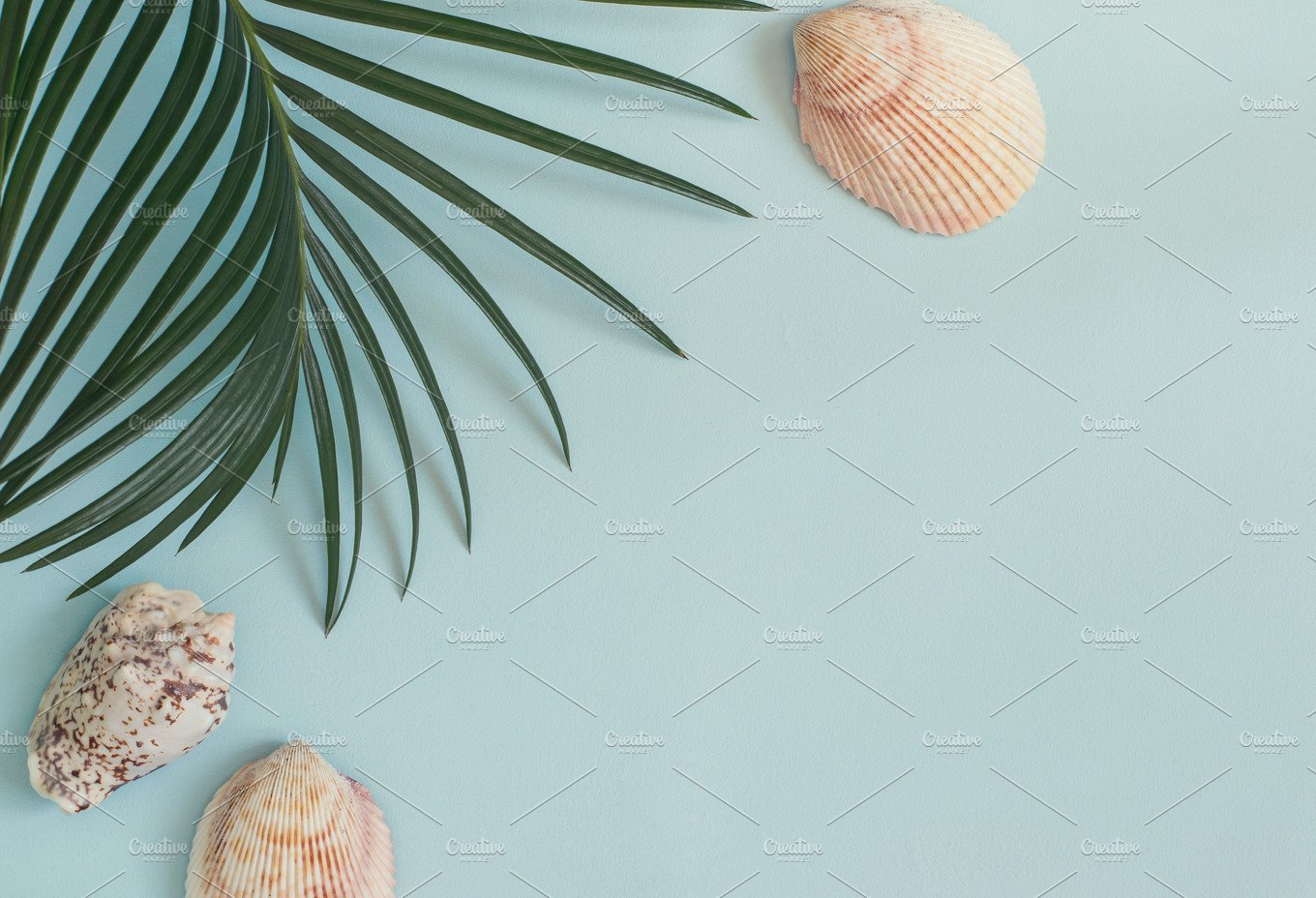 Tropical Leaf And Seashells On A