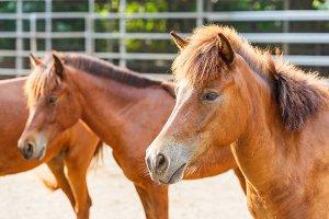 Horse in farm