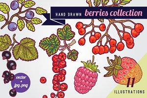 Hand drawn berries illustrations.