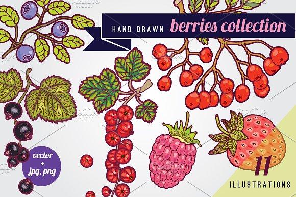 Hand drawn berries illustrations.
