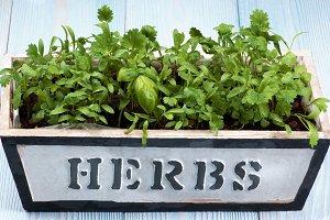 Fresh Greens in Pot
