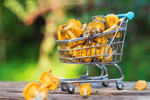 Fresh yellow forest chanterelle mushrooms basket