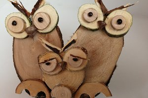 Sad little owl and family on wood