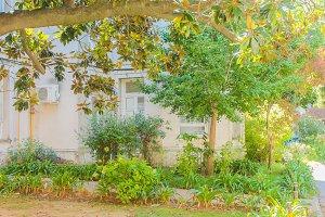 Garden in a Vintage House