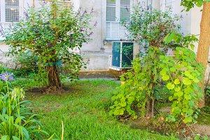 Garden in a Vintage Building