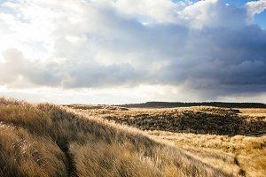 Dune landscape of Denmark