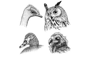 realistic heads of wild birds