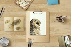 Owl and feathers watercolor set