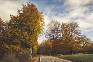 Rural road in the forest in autumn