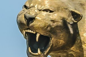 Angry Cougar Sculpture Head
