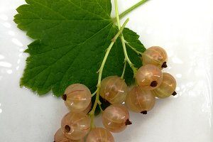 White fresh currants