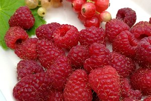 Currants and raspberries