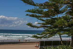 Pine Tree and beach