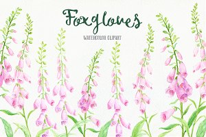 Watercolor Pink Foxgloves Clip Art