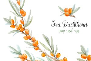 Watercolor set of Sea-buckthorn