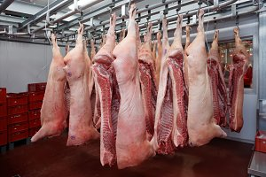 Pig carcasses cut in half