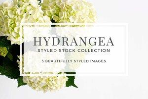Hydrangea Styled Stock