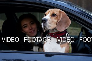 active healthy dog beagle sit in the car with young happy woman, who hugs and strokes it