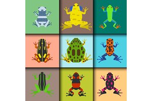 Frog cartoon tropical animal cards cartoon amphibian mascot character wild vector illustration.